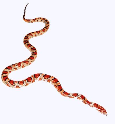 Snake by Brenda Zlamany